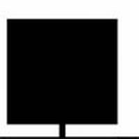 LEI-KERS (laagstam leiboom in scherm)  omtrek   6-8cm