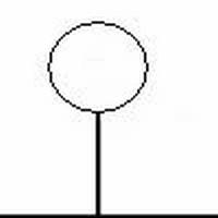 BOL-SIERKERS 'Umbraculifera' (Bolvorm op stam 225cm)  omtrek 10-12cm